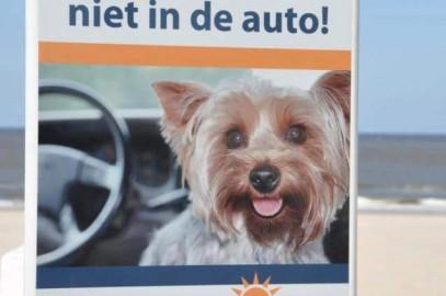 Laat uw trouwe viervoeter niet alleen in de auto bij hoge temperaturen