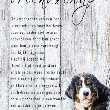 Vriendschap van je hond………..